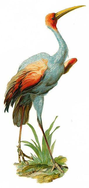 Birds25