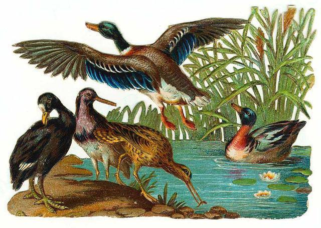 Birds30