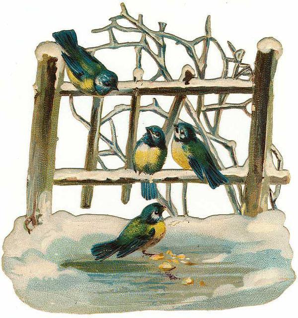 Birds71
