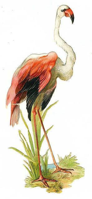 Birds95
