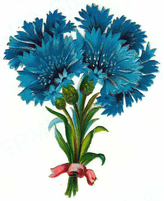 Flowers130