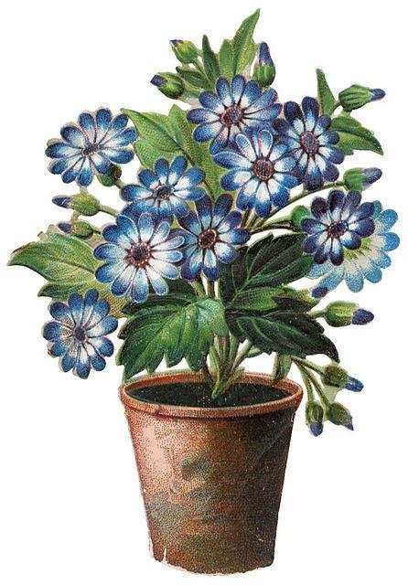 Flowers482