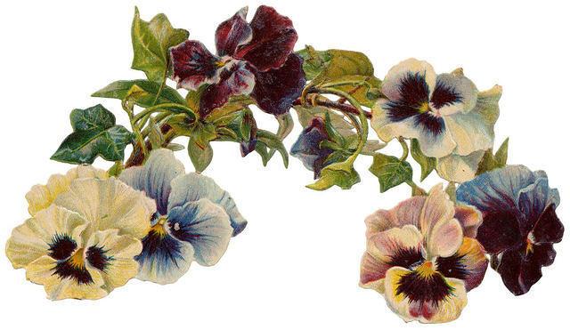 Flowers532
