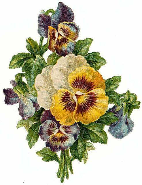 Flowers571