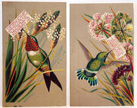 4285608108 3dfd8b5a28 1880s Victorian Trade Cards - Hummingbirds L